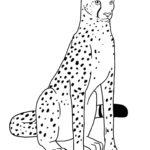 Гепард картинки раскраски (18)