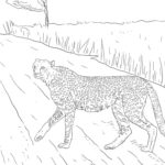 Гепард картинки раскраски (19)