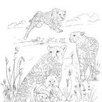 Гепард картинки раскраски (2)
