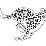 Гепард картинки раскраски (21)