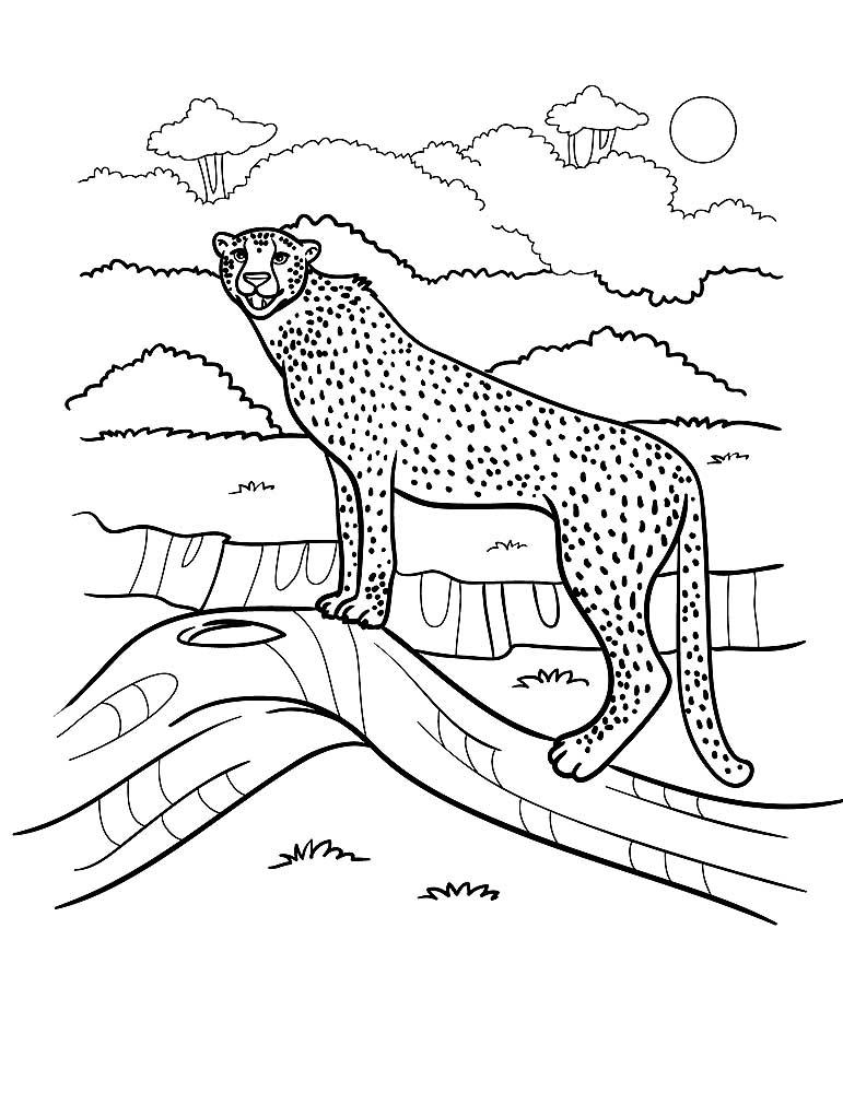 Животные Африки. Интересные факты