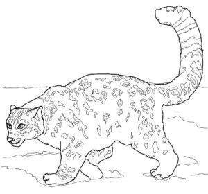 Гепард картинки раскраски (23)
