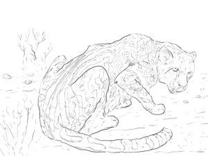 Гепард картинки раскраски (24)