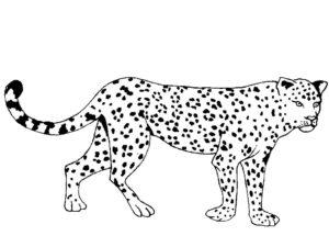 Гепард картинки раскраски (25)