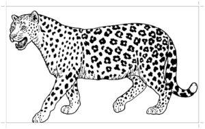 Гепард картинки раскраски (27)