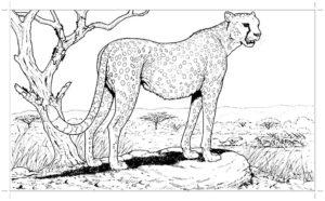 Гепард картинки раскраски (29)