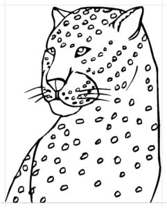 Гепард картинки раскраски (30)