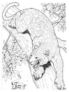 Гепард картинки раскраски (32)