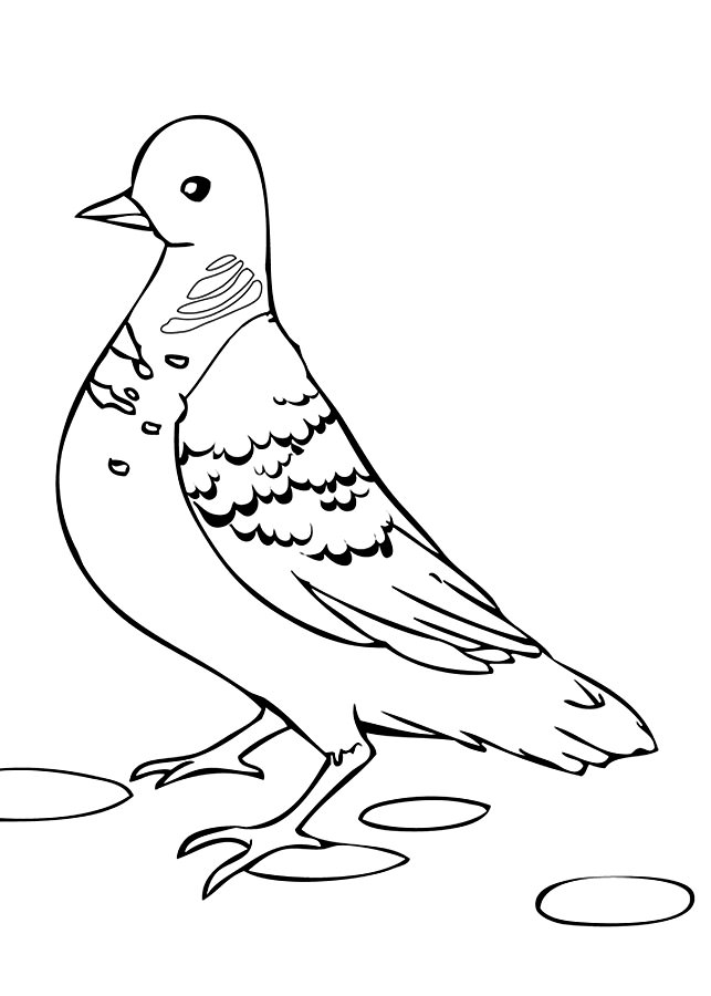 рисунки для раскрашивания голуби ожог бактериоз
