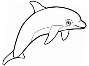 Дельфин картинки раскраски (21)