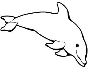 Дельфин картинки раскраски (24)