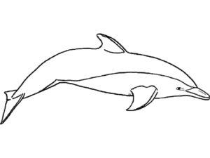 Дельфин картинки раскраски (26)