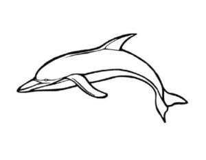 Дельфин картинки раскраски (30)
