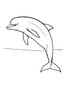 Дельфин картинки раскраски (33)
