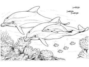 Дельфин картинки раскраски (36)