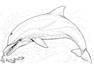 Дельфин картинки раскраски (37)
