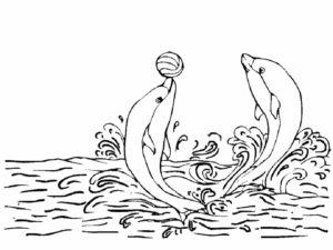 Дельфин картинки раскраски (38)