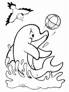 Дельфин картинки раскраски (41)