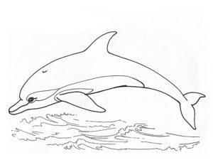 Дельфин картинки раскраски (45)