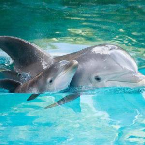 Дельфин раскраски