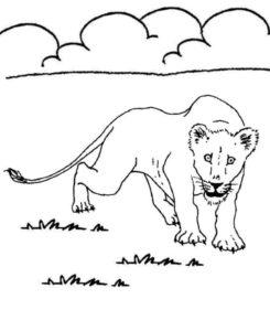 Дикие животные картинки раскраски (11)