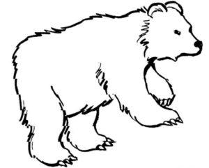 Дикие животные картинки раскраски (12)