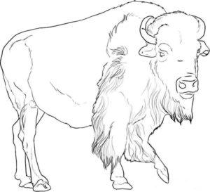 Дикие животные картинки раскраски (13)