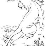 Дикие животные картинки раскраски (14)