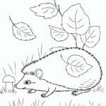 Дикие животные картинки раскраски (17)