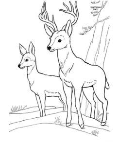 Дикие животные картинки раскраски (20)