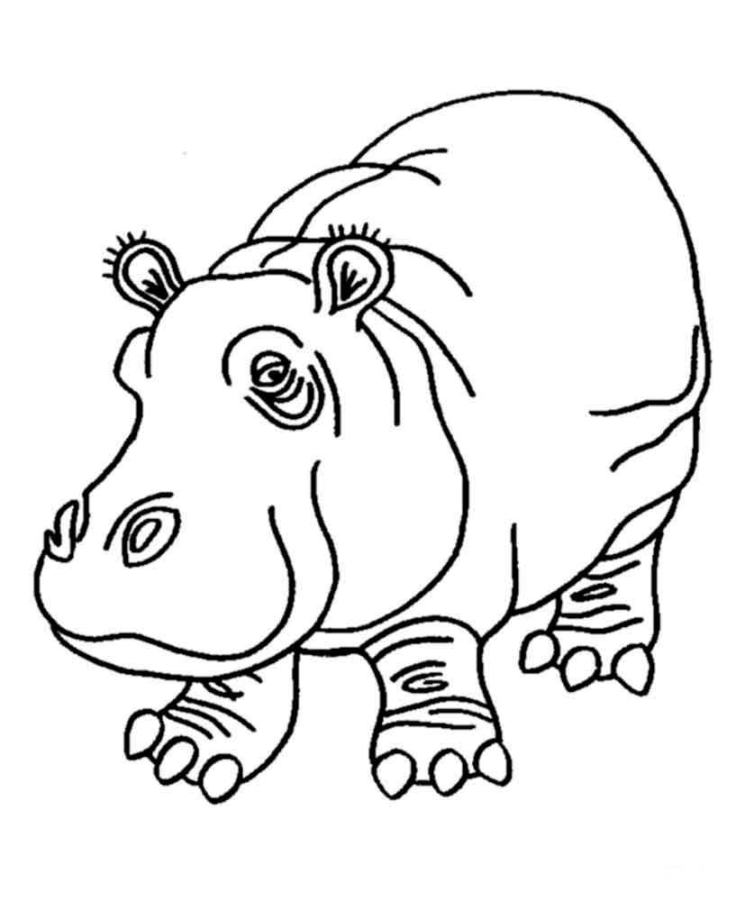 Дикие животные картинки раскраски (21)