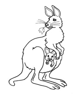 Дикие животные картинки раскраски (22)