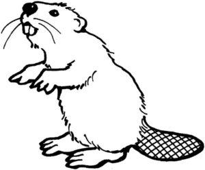 Дикие животные картинки раскраски (23)