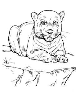 Дикие животные картинки раскраски (24)