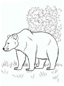 Дикие животные картинки раскраски (26)