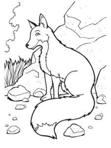 Дикие животные картинки раскраски (28)