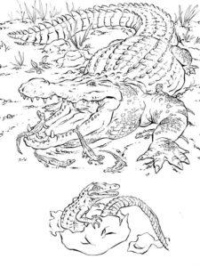 Дикие животные картинки раскраски (30)