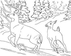 Дикие животные картинки раскраски (31)