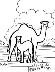 Дикие животные картинки раскраски (34)