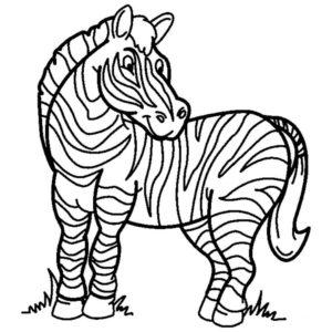 Дикие животные картинки раскраски (35)