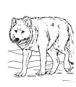 Дикие животные картинки раскраски (37)