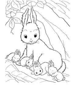 Дикие животные картинки раскраски (39)
