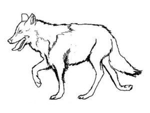 Дикие животные картинки раскраски (4)