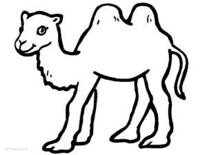 Дикие животные картинки раскраски (40)
