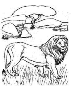 Дикие животные картинки раскраски (44)