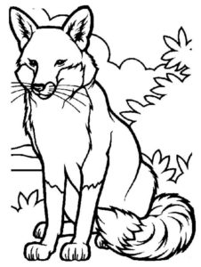Дикие животные картинки раскраски (47)