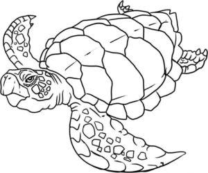 Дикие животные картинки раскраски (48)