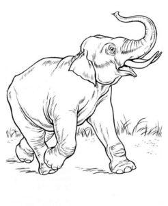 Дикие животные картинки раскраски (49)