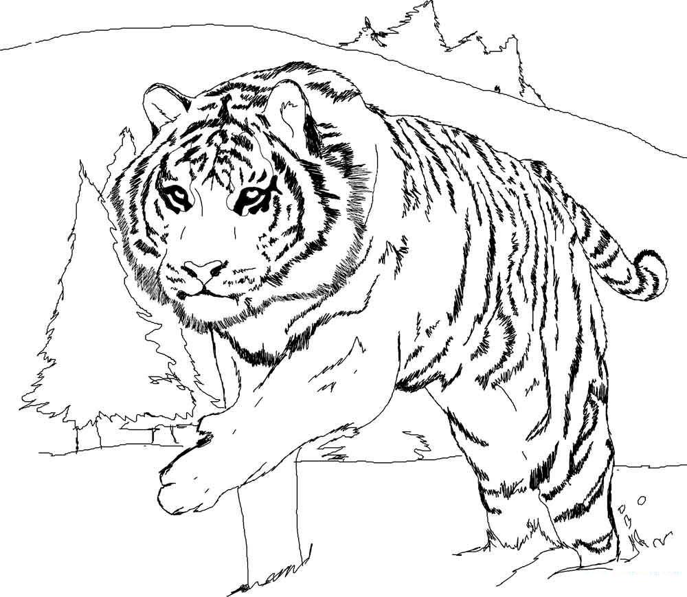 Раскраска картинки тигров
