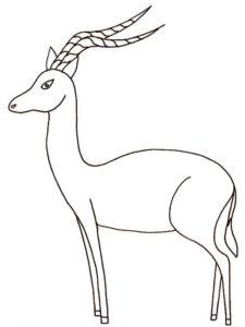 Дикие животные картинки раскраски (51)